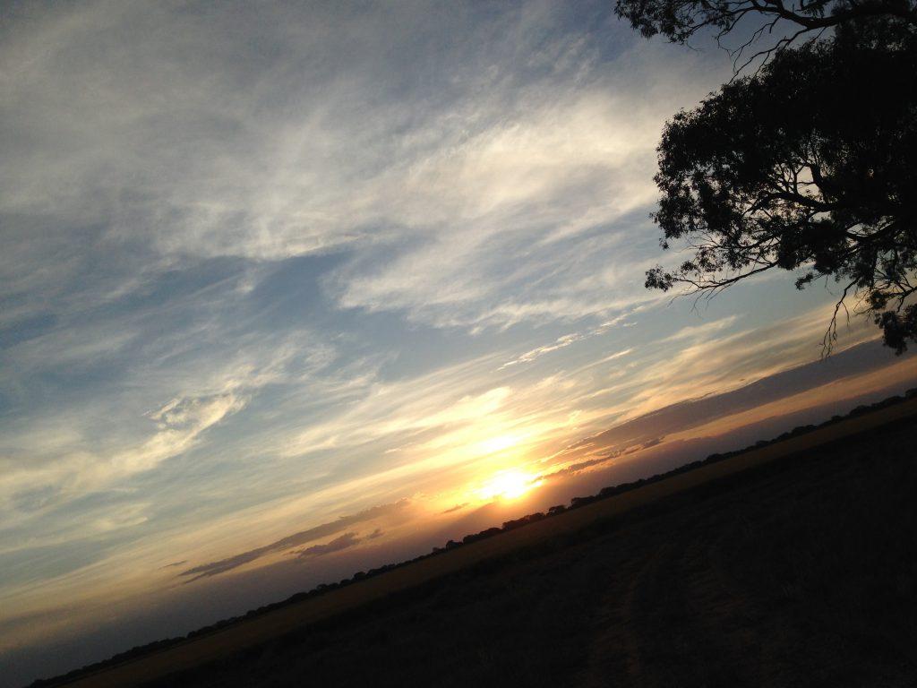 夕日 ファーム