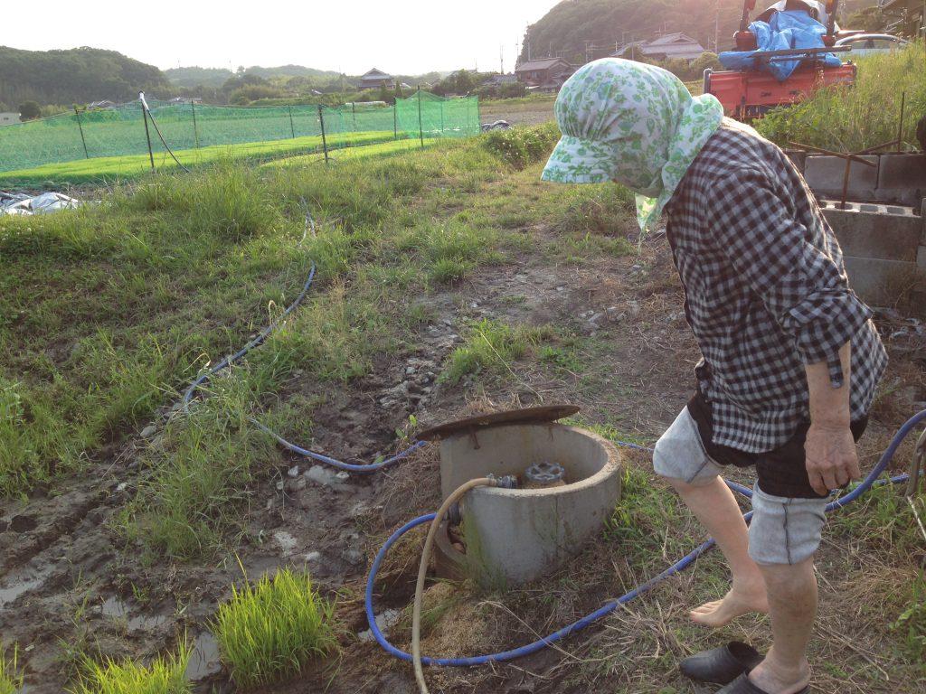 祖母と補植作業