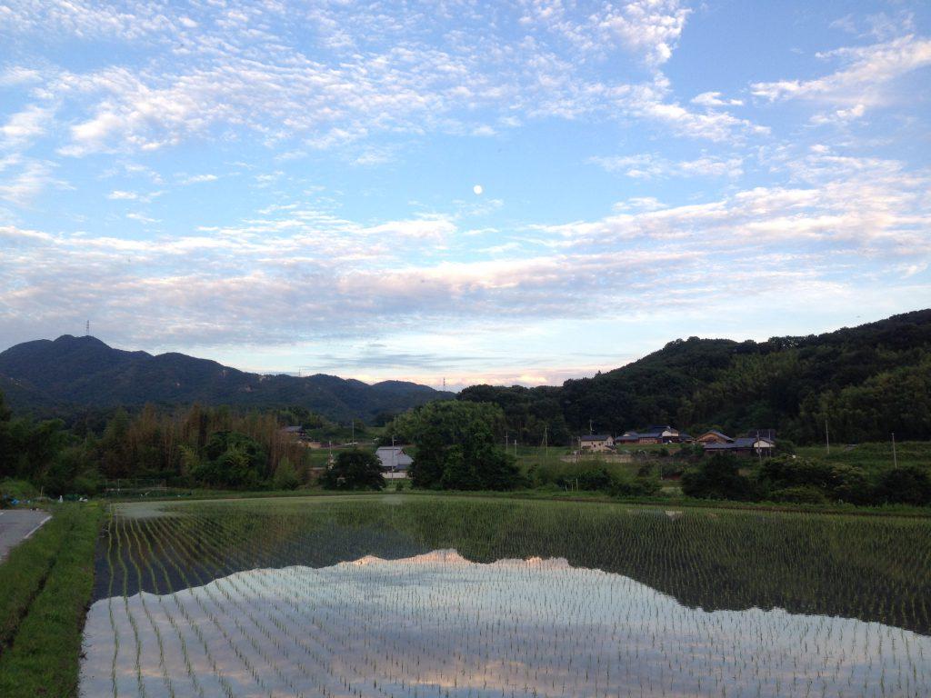 月と田んぼ