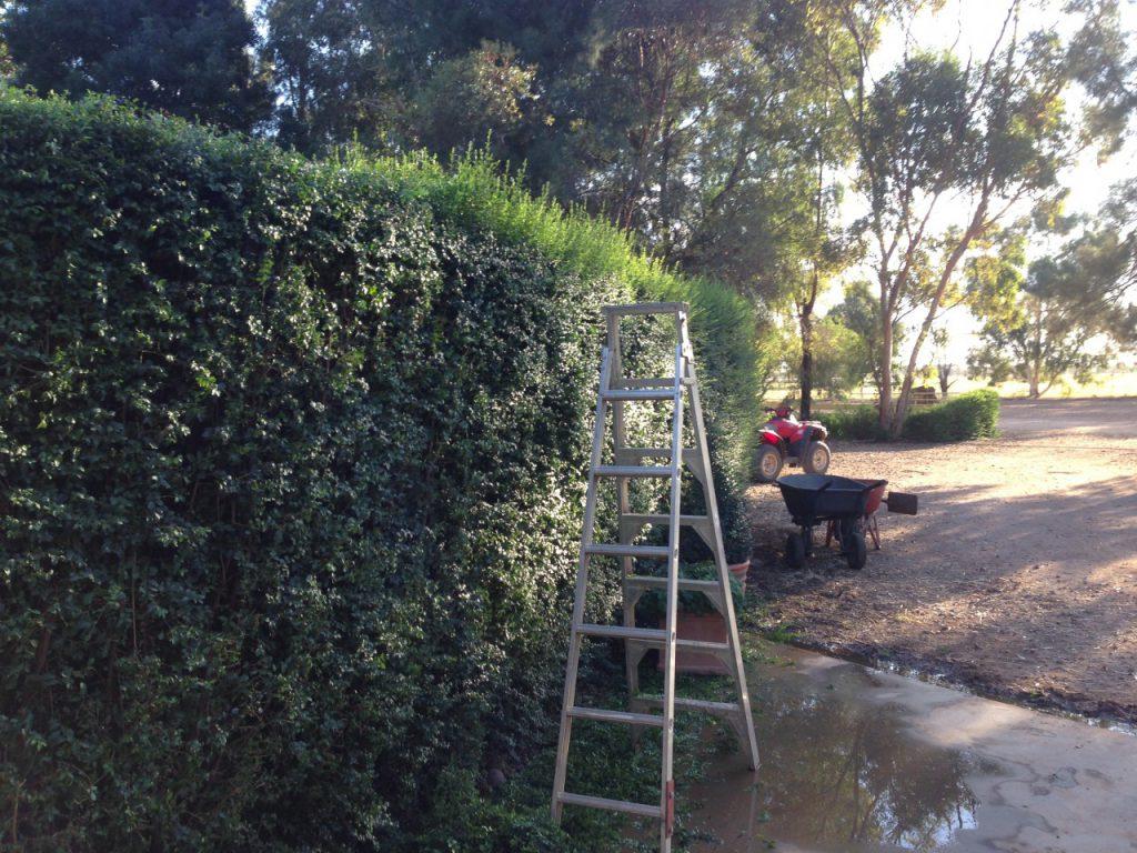 木の剪定仕事