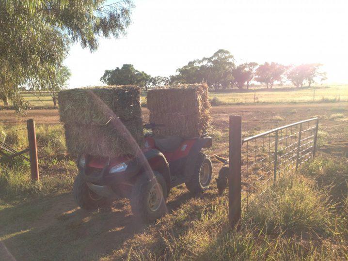藁を四輪で運ぶ