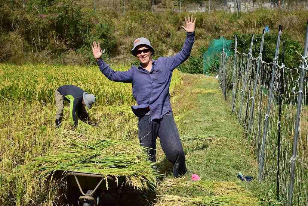 「自給農法のコメ作り」稲刈り中