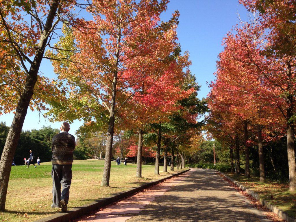 森林公園を歩く