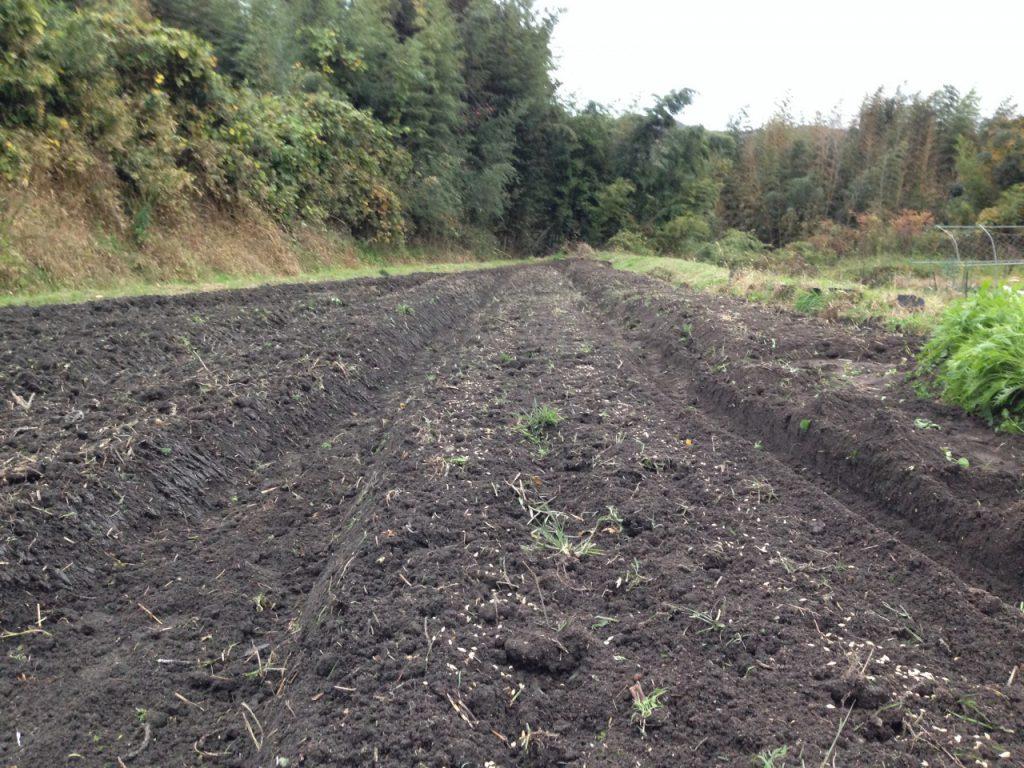 トラクターで耕し、大麦を蒔いた直後の畑