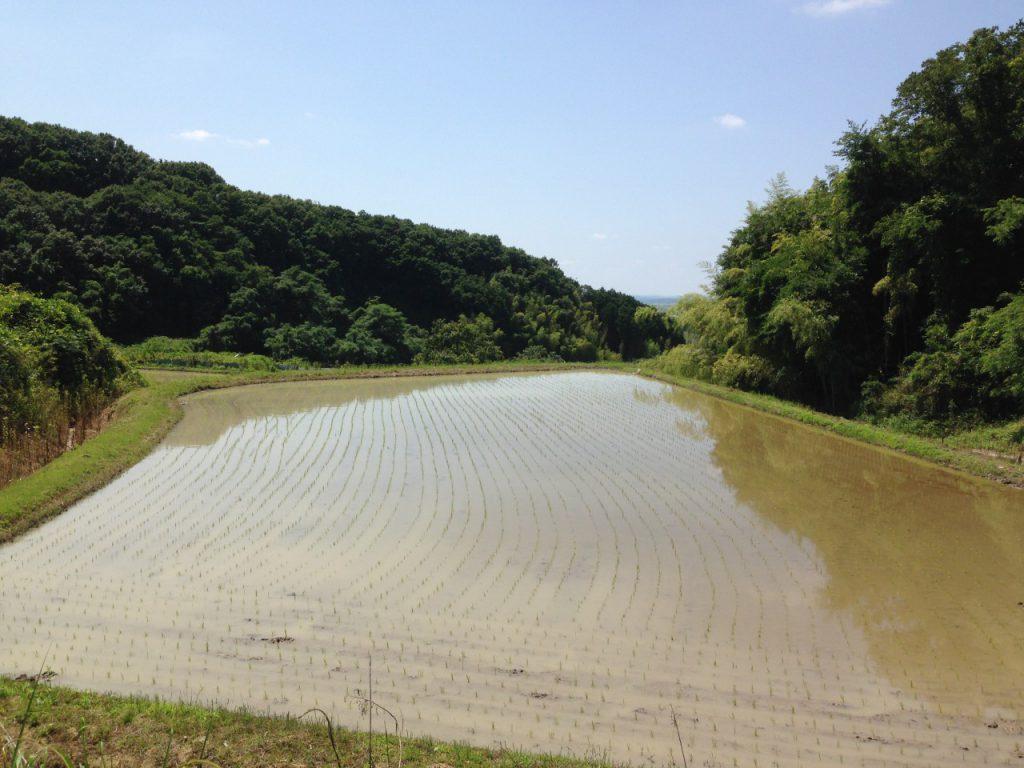 三木市志染町戸田にある田んぼです
