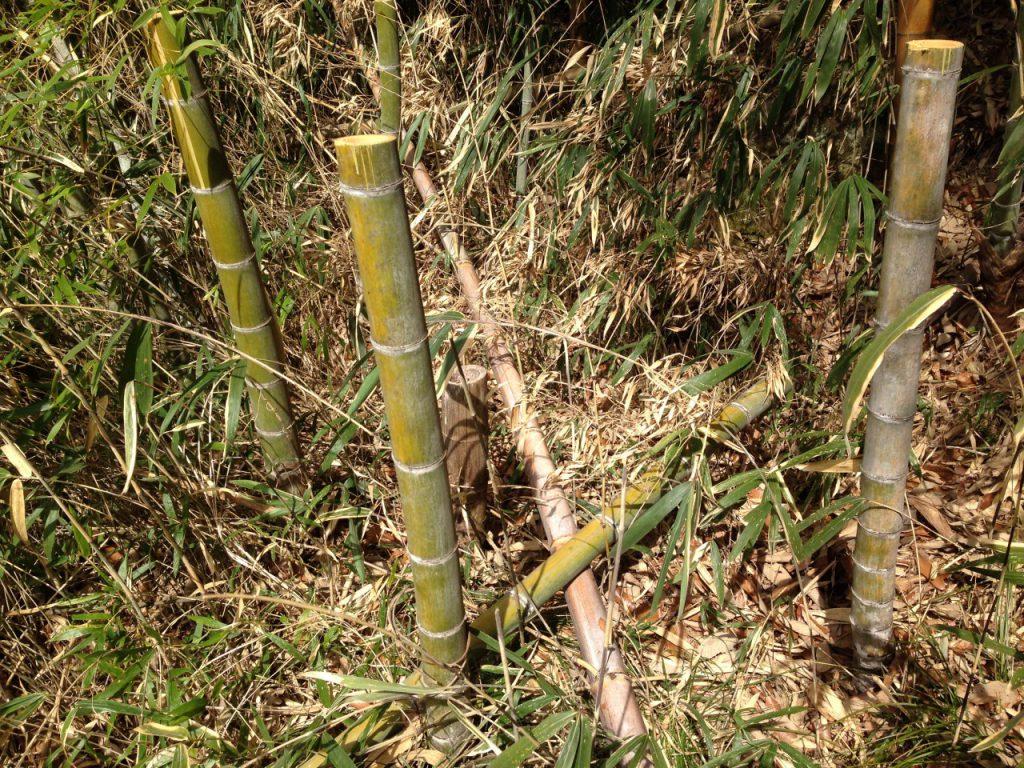 竹を1メートルの長さを残して切る