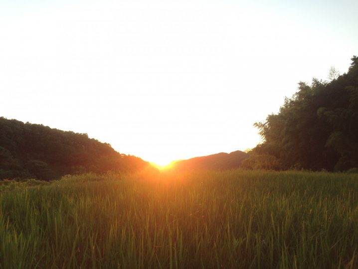 農林22号の田んぼからの夕日