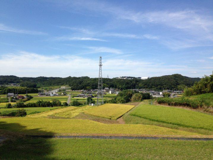 9月の田んぼ