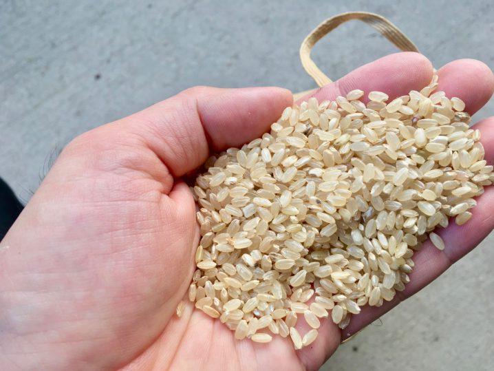 農林22号玄米