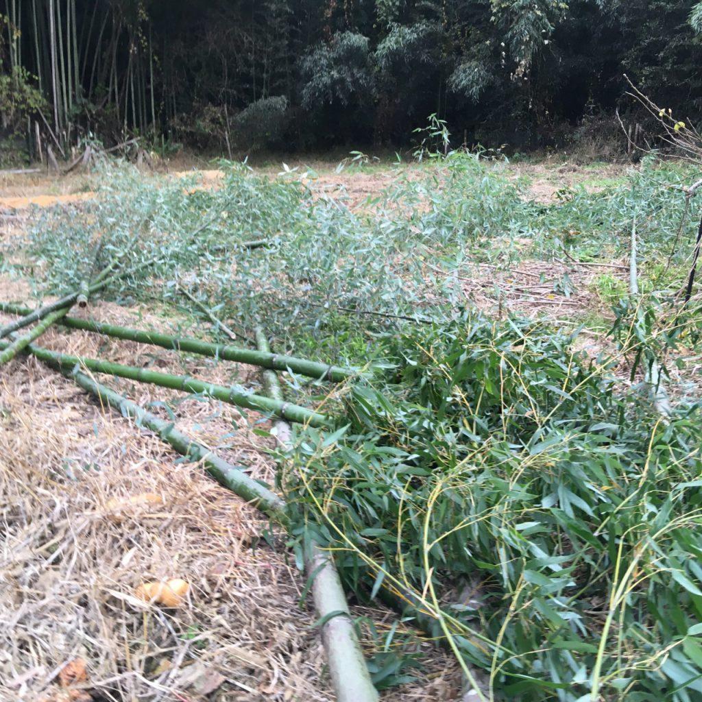 竹パウダー用に刈りとった竹