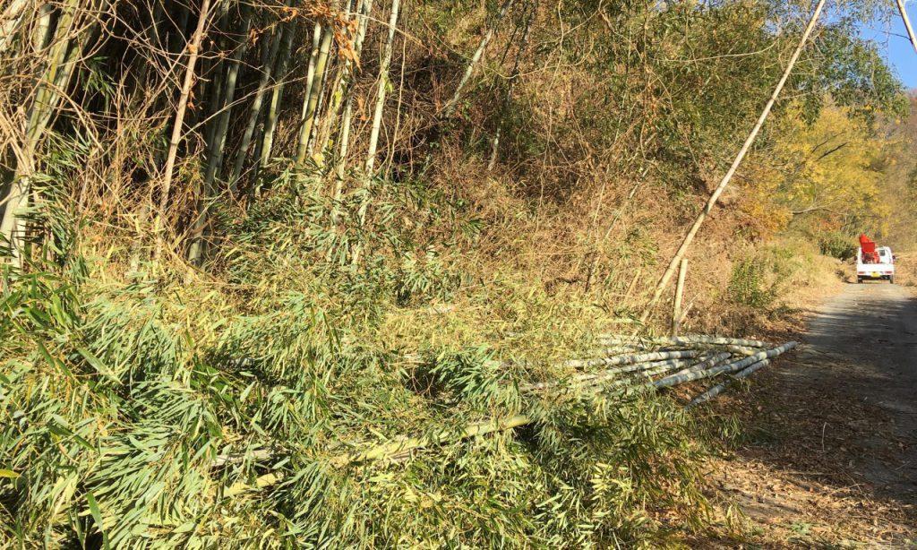 竹パウダー用の竹