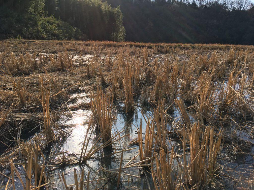 発酵竹パウダーと米ぬかを入れた直後に水