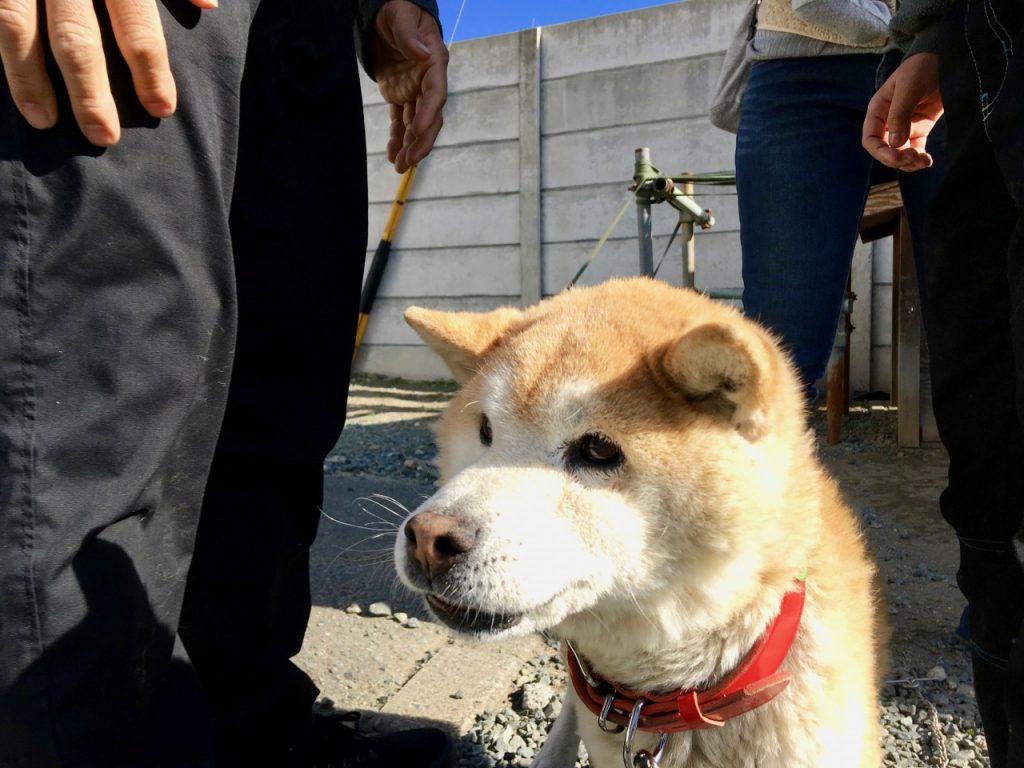 虚空蔵寺の犬