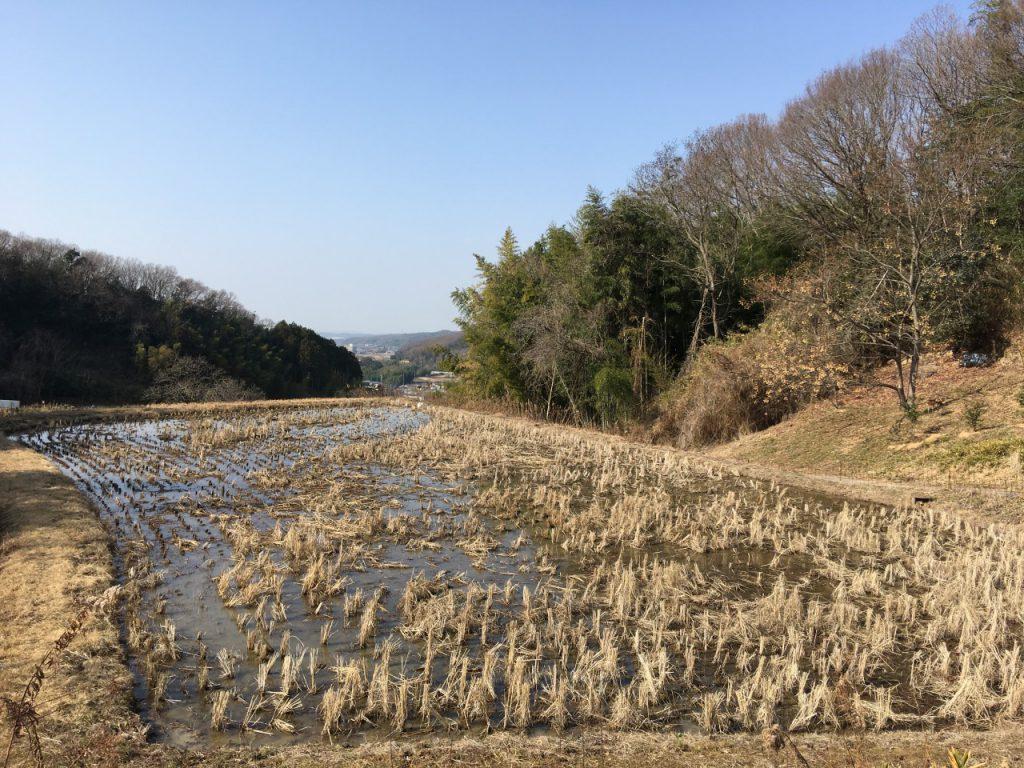 冬期湛水中の水田