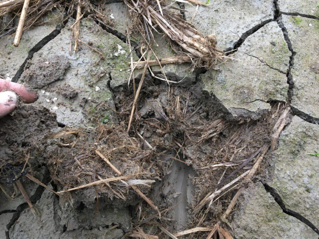 冬期湛水6ヶ月後の表面土