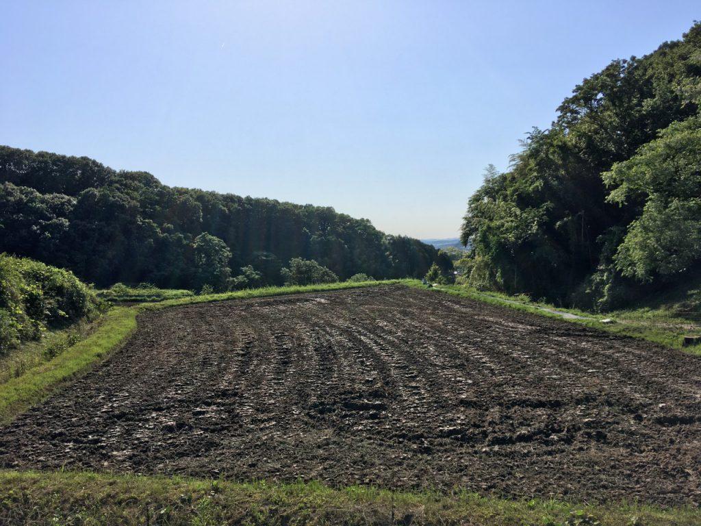 山側の田んぼ