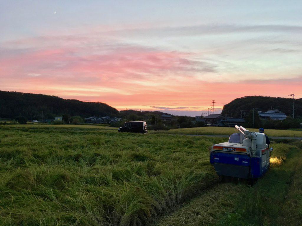 山田錦収穫