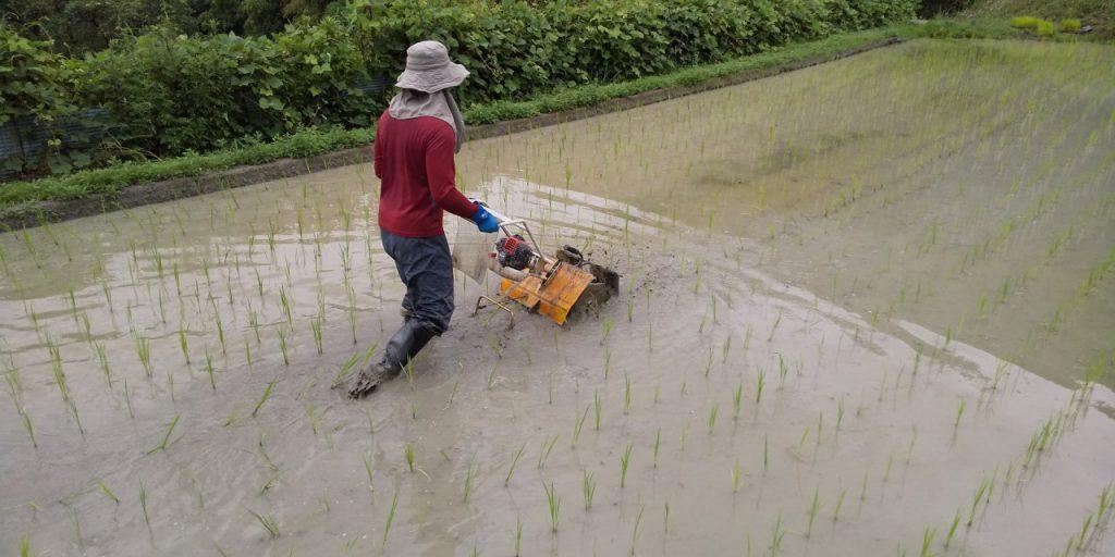 中耕除草作業