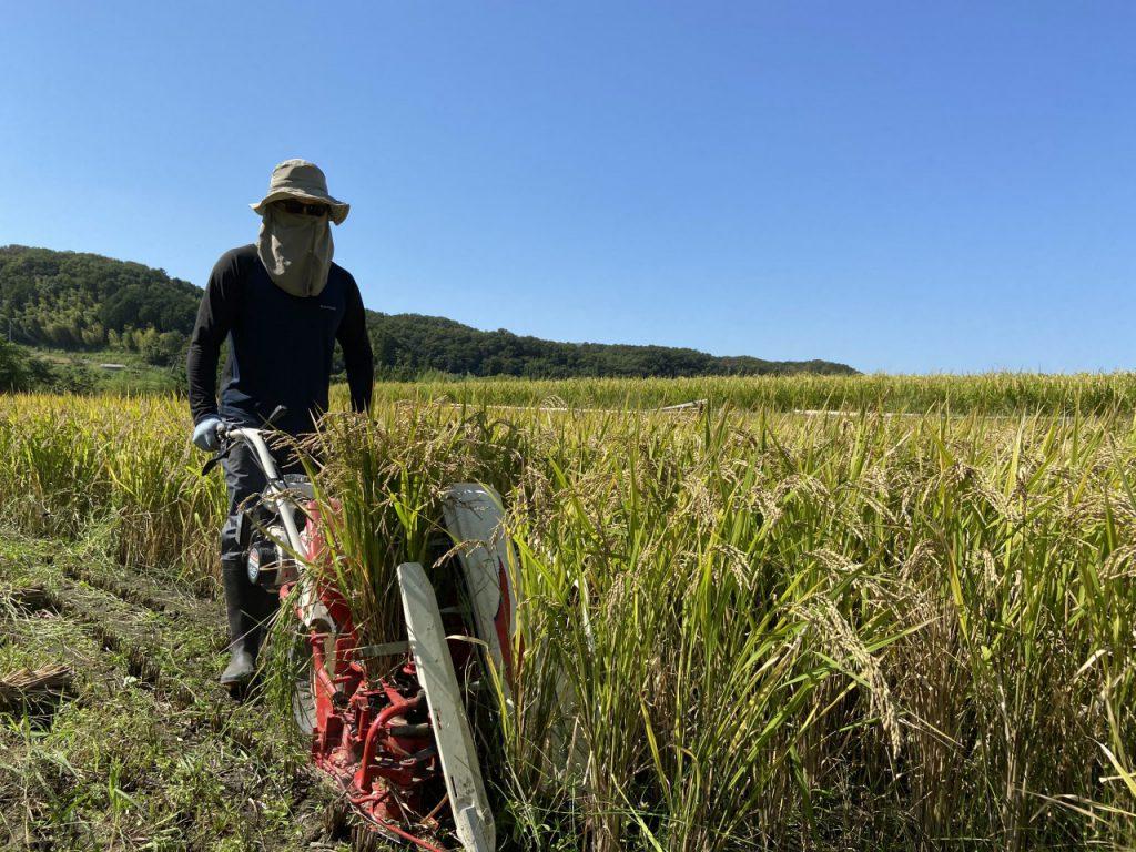 バインダー稲刈り