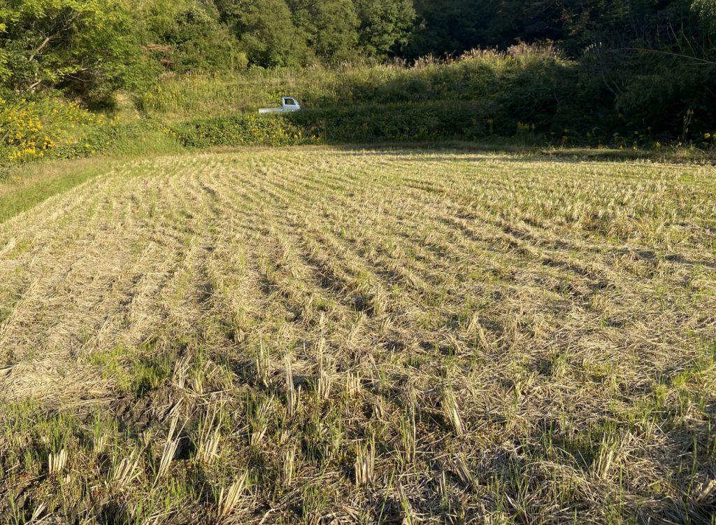 収穫後の田んぼ