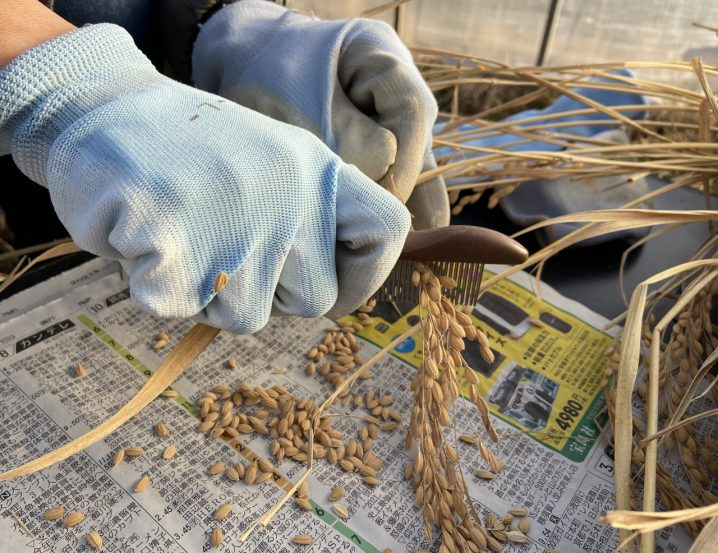種籾の脱芒