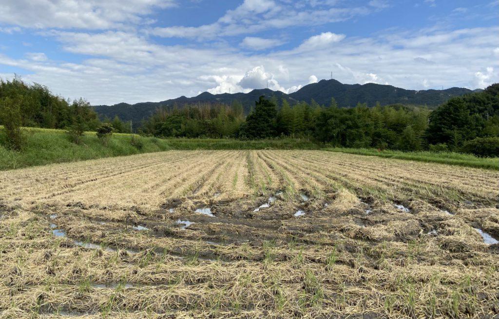コシヒカリ収穫完了